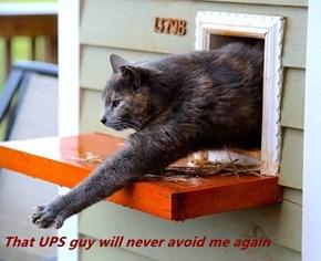 That UPS guy will never avoid me again