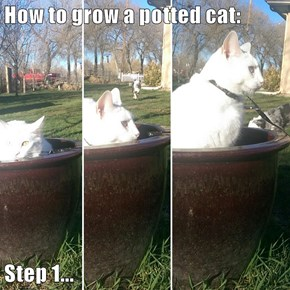How to grow a potted cat:  Step 1...