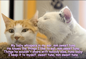 Sweet nothings / Sweet tuna