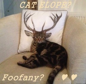 CAT ELOPE?  Foofany?      ♥ ♥