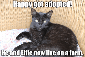 Happy Got Adopted!