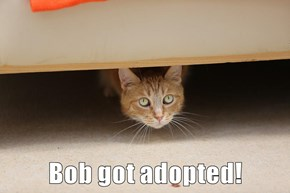Bob got adopted!
