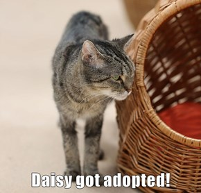 Daisy got adopted!