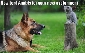 Now Lord Anubis for your next assignment