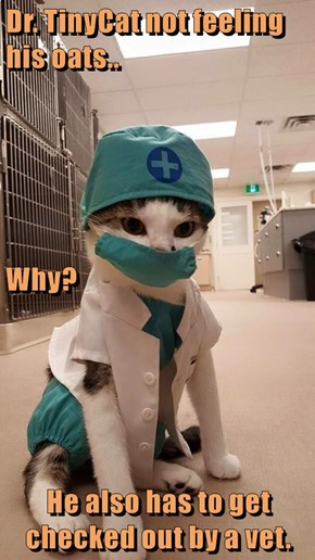 Dr. TinyCat not feeling his oats.. Why? He also has to get checked out by a vet.