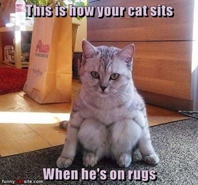 This is how your cat sits  When he's on rugs
