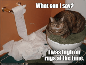 Take The First Step, Kitteh: Admit You Are Powerless Over Rugs.