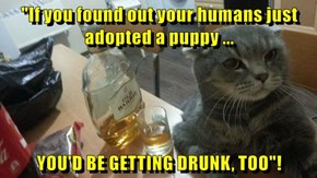 """""""If you found out your humans just adopted a puppy ...  YOU'D BE GETTING DRUNK, TOO""""!"""