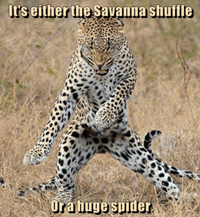 It's either the Savanna shuffle  Or a huge spider