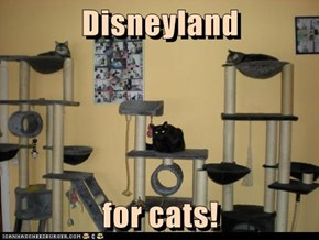 Disneyland  for cats!
