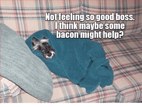 'Bacon each day, keeps the vet away'