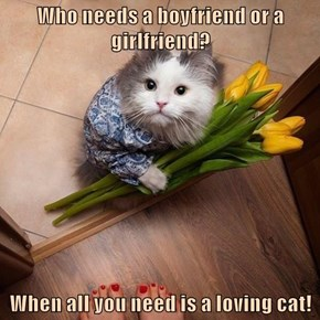 Who needs a boyfriend or a girlfriend?  When all you need is a loving cat!