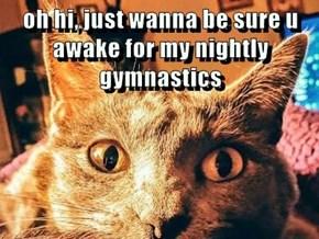 oh hi, just wanna be sure u awake for my nightly gymnastics