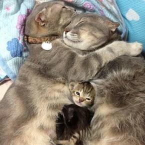 Kitty family snuggles