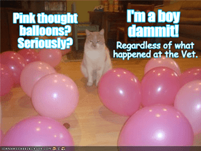 Hey, Frank? What Color Thought Balloons Do We Send Over For Neutered Cats With Gender Issues?!