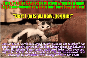 "RIO LOLYMPICS NEWS FLASH: Just in! Wunderkitten Mischief scores huge upset in teh Goggie Wrangling Competition and takes home another Gold Medal! Upset dat teh leading Russian athlete wer defeated, Russian Coach Vorchunkle cries ""fowl""!"