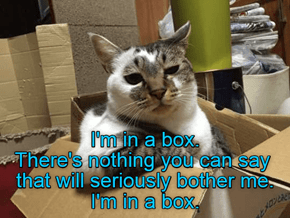 I'm in a box.