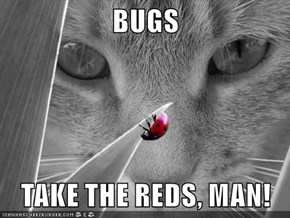 BUGS  TAKE THE REDS, MAN!