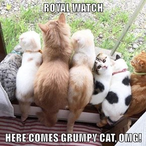 ROYAL WATCH  HERE COMES GRUMPY CAT, OMG!