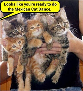 Looks like you're ready to do the Mexican Cat Dance (recaption: http://tinyurl.com/jled9xv