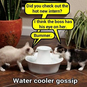 Water cooler gossip (recaption: http://tinyurl.com/gkuwxva