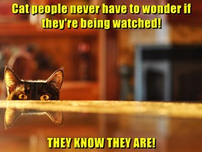 Cat people never have to wonder if they're being watched!  THEY KNOW THEY ARE!