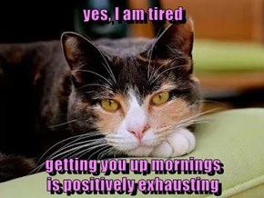 yes, I am tired  getting you up mornings                                              is positively exhausting
