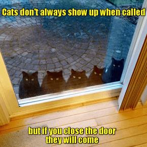 Quick Cat Facts