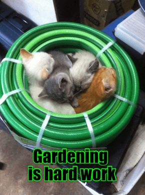 Gardening is hard work