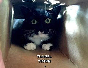 TUNNEL VISION                                                                     .