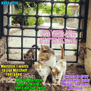 RIO LIFESTYLE NEWS: Wiff teh stunning arrival in Rio of teh eggsiting newcomer Mischeff, many thowsands ob Rio kittie families wake up erly in teh morning to get to teh LoLympic venues erly so dey can get teh best seats to see Mischief compete!