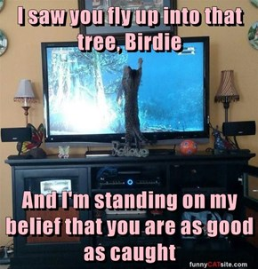 I saw you fly up into that tree, Birdie  And I'm standing on my belief that you are as good as caught