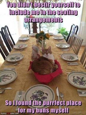 You didn't bestir yourself to include me in the seating arrangements  So I found the purrfect place for my buns myself