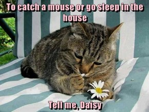To catch a mouse or go sleep in the house  Tell me, Daisy