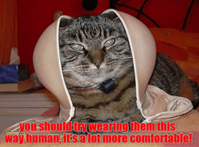 you should try wearing them this way human, it's a lot more comfortable!