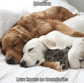 Adoption  Love knows no boundaries