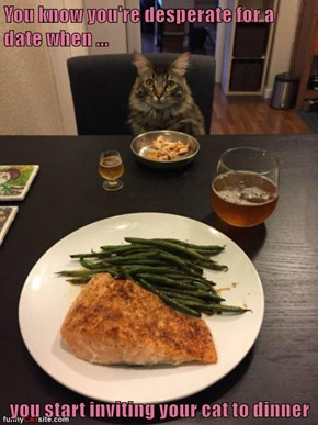 You know you're desperate for a date when ...   you start inviting your cat to dinner