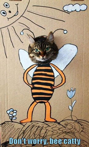 Don't worry, bee catty