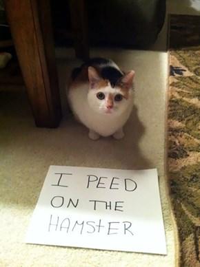 That Poor Hamster