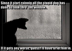 Since it start rainnig all the stupid dog has done, is look thro' the window..  If it gets any worse, guess l'll have to let him in.