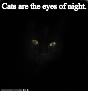 I'm guessing the night wants tuna...