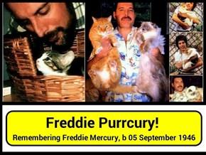 Freddie Purrcury!