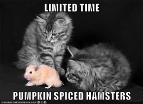 LIMITED TIME  PUMPKIN SPICED HAMSTERS