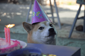 Much Candle. So Birthday. Wow.