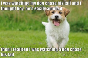 I was watching my dog chase his tail and I thought boy, he's easily amused  then I realized I was watching a dog chase his tail