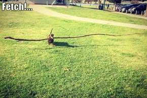 Fetch!...
