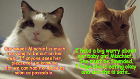 Missy and Punkin habs a big worry about der missing daughter Mischief!