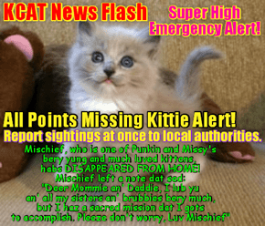 KCAT News Flash: Missing Kitten Alert for Michief, luving daughter of Missy and Punkin!