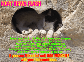 KCAT News Flash: The missing Mischief spotted but still is not rescued!