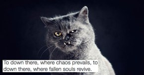 """Black Metal Cats"" is a Twitter Account of Cat Pictures Paired With Metal Lyrics and It's Dark AF"
